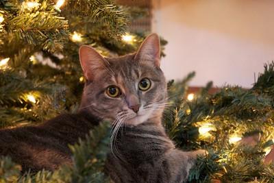 A Very Gertrude Christmas
