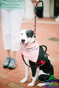2019 Mayor's Walk with Pups