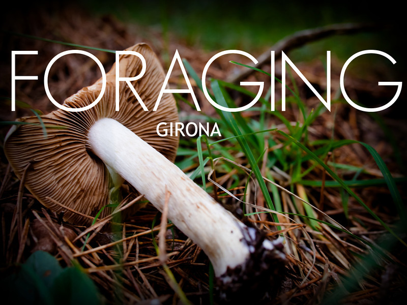 mushroom cover.jpg