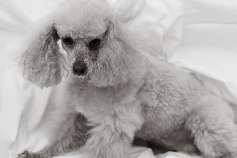opal mike dogs (1 of 1)-73.jpg