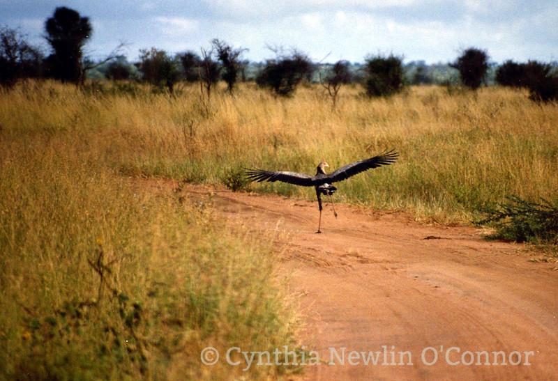 running bird.tif-1.jpg