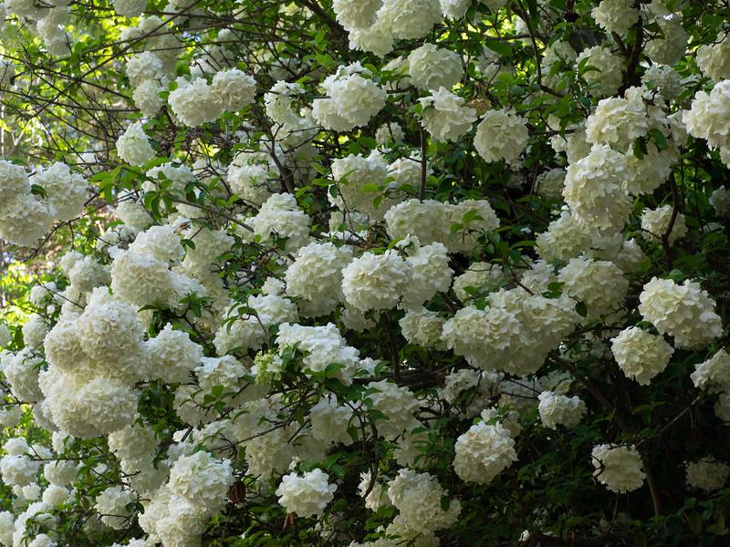 Garden_apr20-4200138.jpg