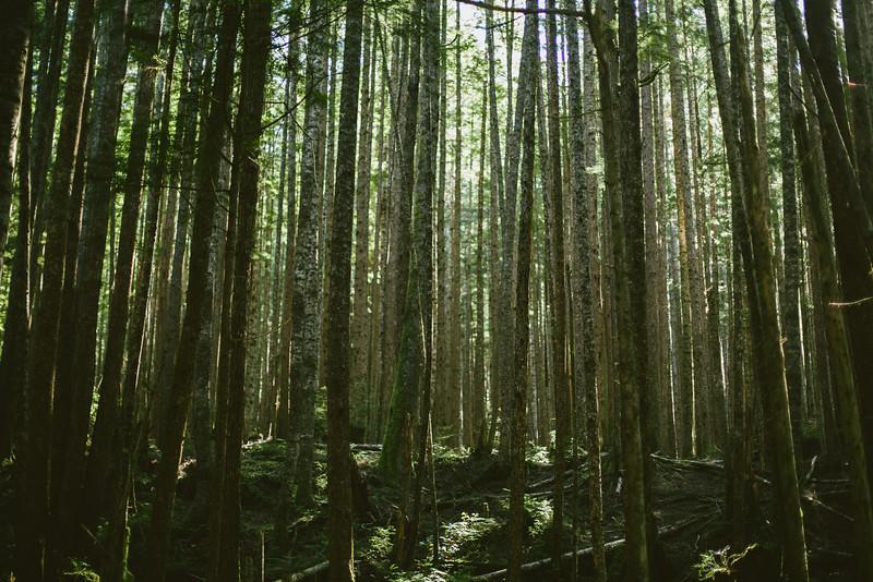 150913_Nikki_Forest_5292.jpg