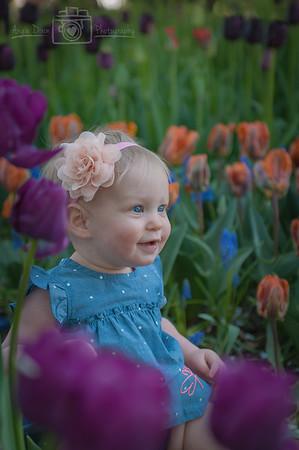 Madrona - Tulip Fields