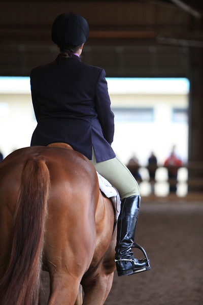 Novice Amateur Hunter Under Saddle