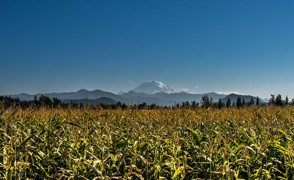 Mount Rainier - Camping
