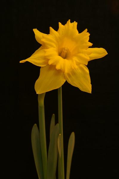 Yel Flower12.jpg