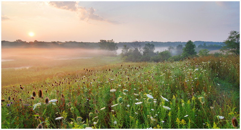 Sunrise over the Lefurge Wetlands, SE Michigan Land Conservancy.