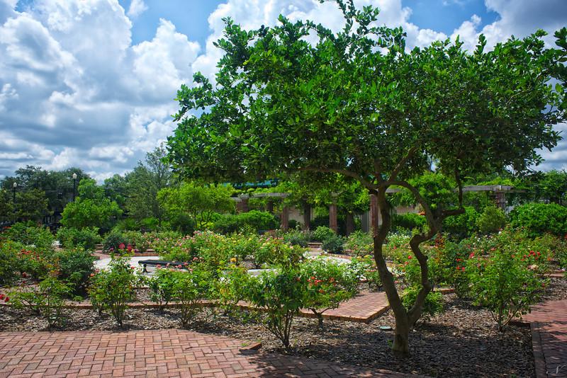 """WPP1319  """"Central Park Rose Garden"""""""