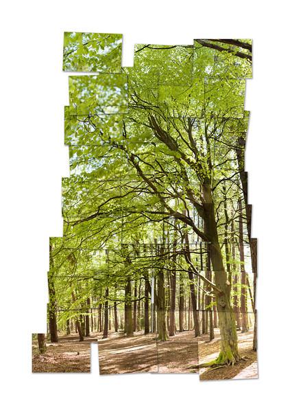 TreesHockney.jpg