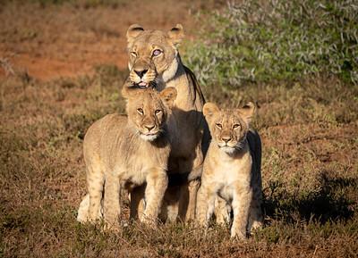 Shamwari Private Game Reserve  Oct 2019