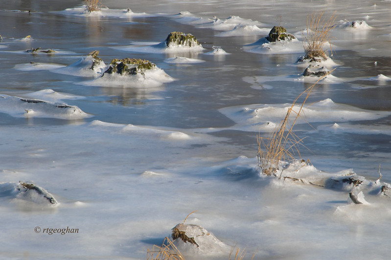 Jan 22_Mill Creek Marsh Winter_4099.jpg