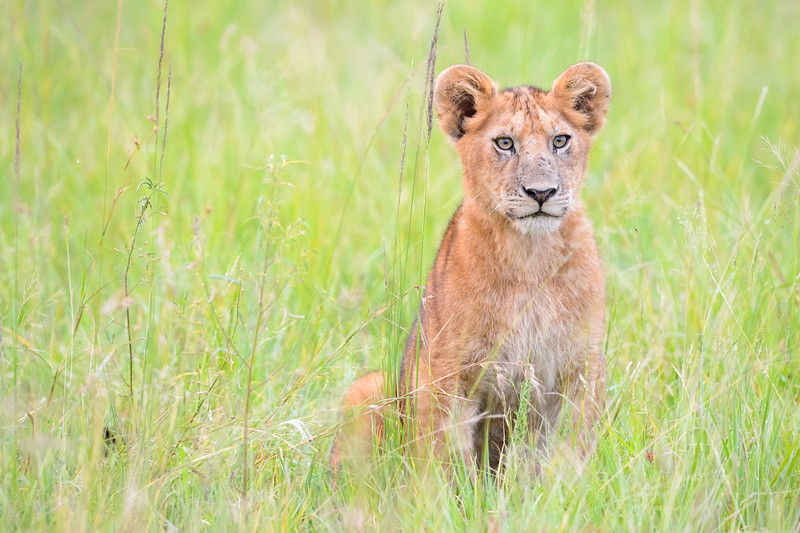 20160211_0234_Serengeti_Day3.jpg