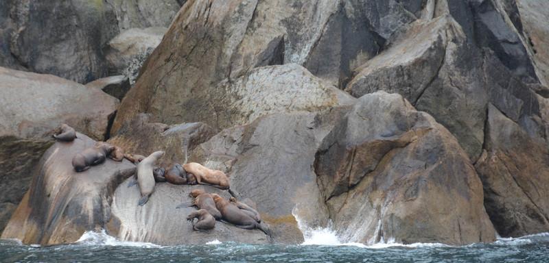Kenai-Fjords-57.jpg