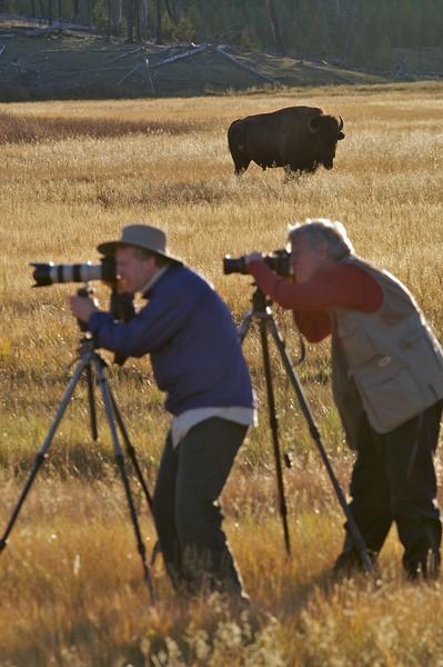 Photographers must beware in Yellowstone  [September; Yellowstone National Park, Wyoming]