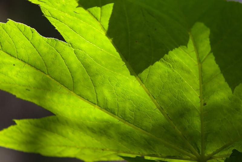 IMG_6150Alaska 2 - Maple Leaf - © Brandon Harvey Photography_.jpg