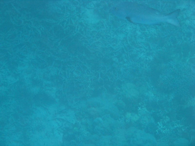 Australia - Great Barrier Reef-5.JPG
