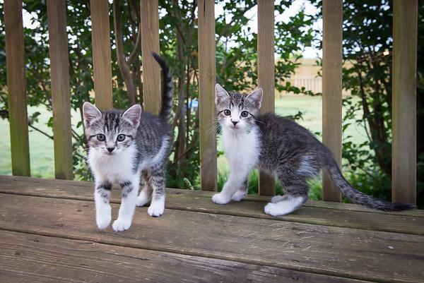 Kittens Memorial Day Wknd 2016