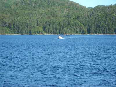 Cod Fishing at Woody Point