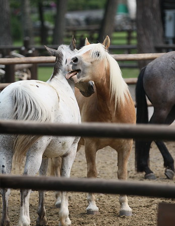 Horseback  and Elk