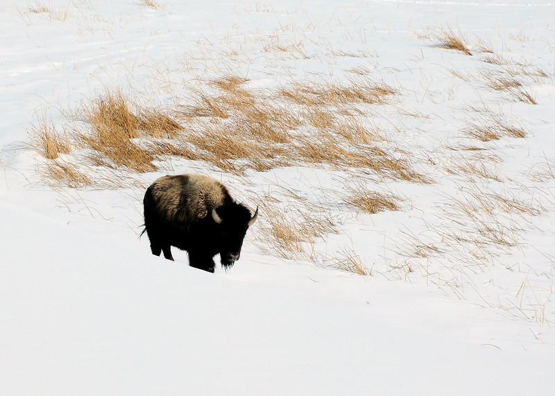 Yellowstone_036.jpg