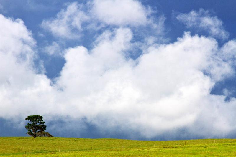 www.asharpphoto.biz - Lonely Tree
