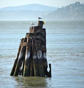 San Francisco Bay Cruise - 04/10/2013
