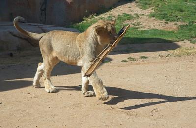 Wild Animal Park 6/24/2007