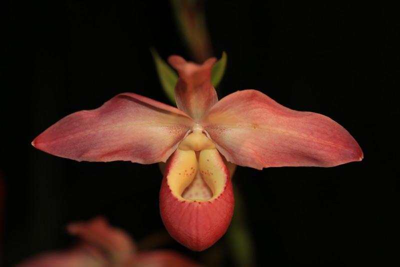 Orchids 2016