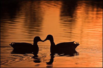 Jacobson Park Sunrise 4-25-09