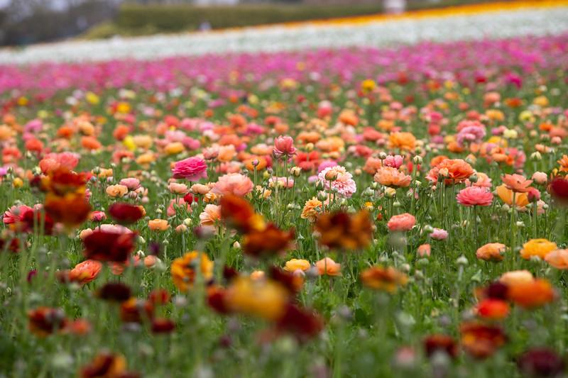Spring Flowers B-292.jpg