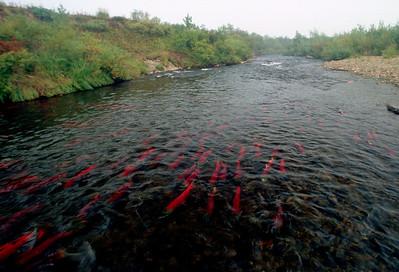Alagnak River 2004