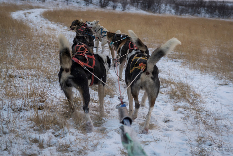 Dog Mushing-9694.jpg