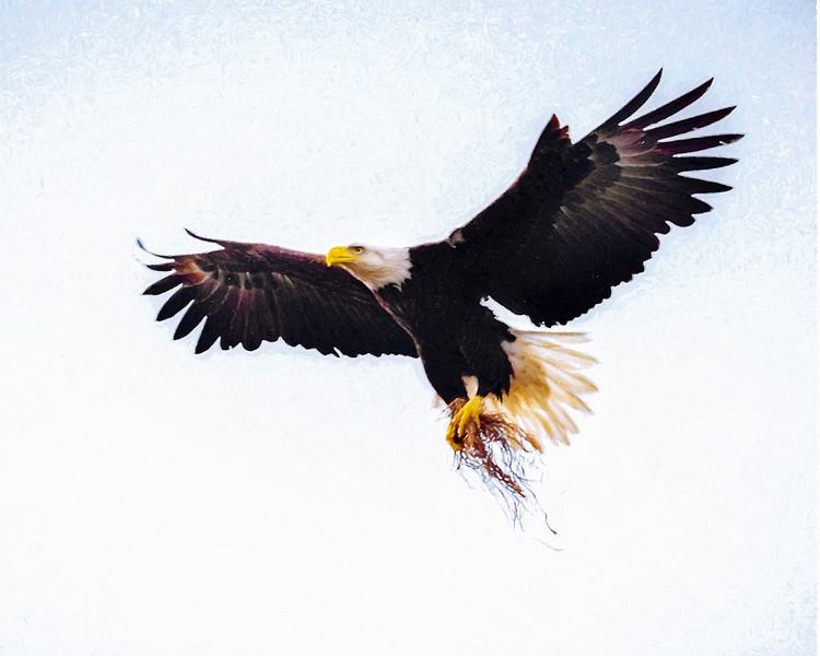 eagle_DSC9372-copy.jpg