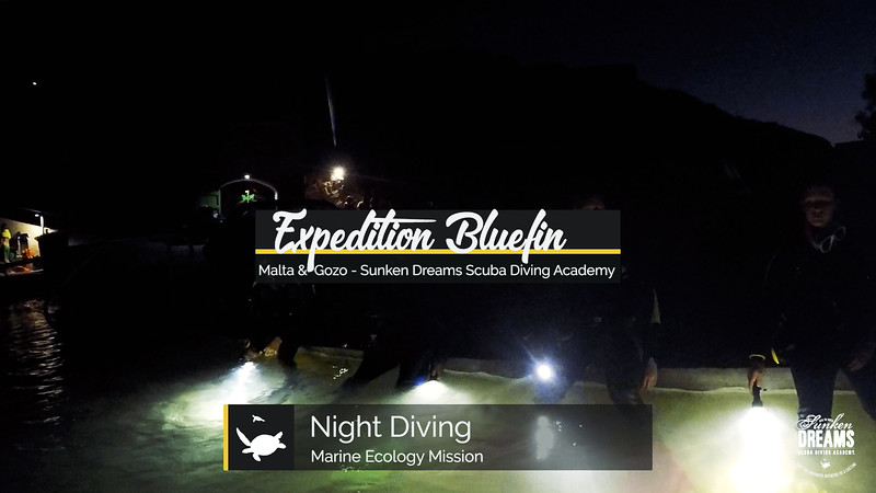 Expedition Bluefin: Malta & Gozo - Night Diving