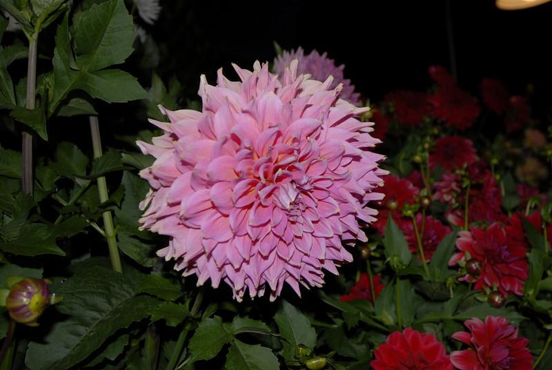 070901 7977 Canada - Victoria - Empress Hotel and Butchart Gardens Fireworks _F _E ~E ~L.JPG