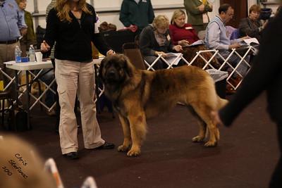Winners Dog-LCA Saturday 3/13/10