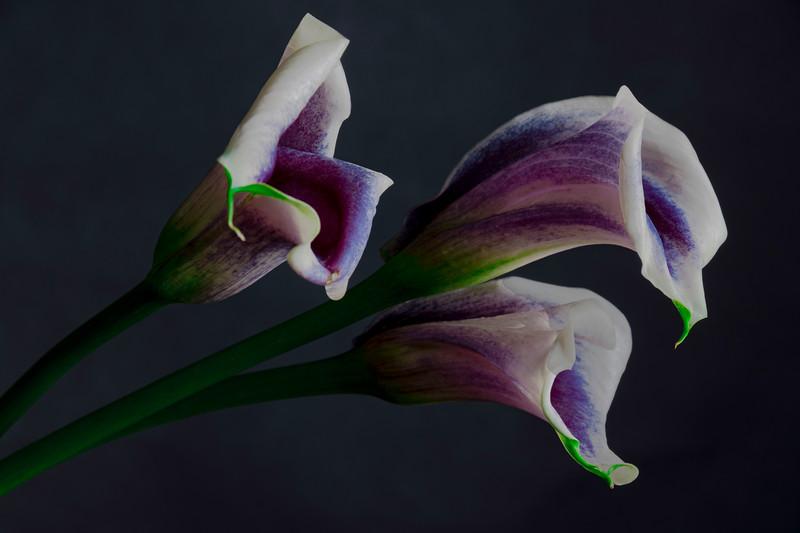 Botanicals03182020-049.jpg