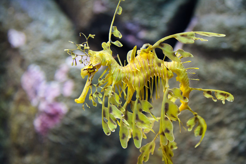 Monterey Bay Aquarium-2410.jpg
