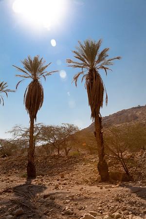 Qumran & Masada