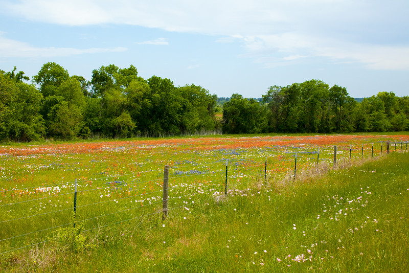 2016_4_9 Texas Wildflower Shoot-8416.jpg