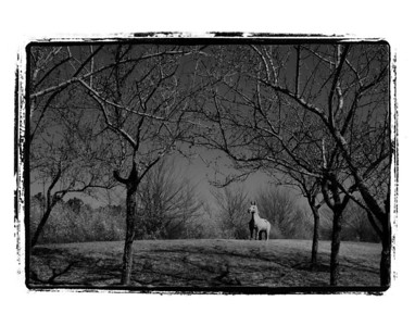 20110213 Farewell The Forbidden Gardens (bw)