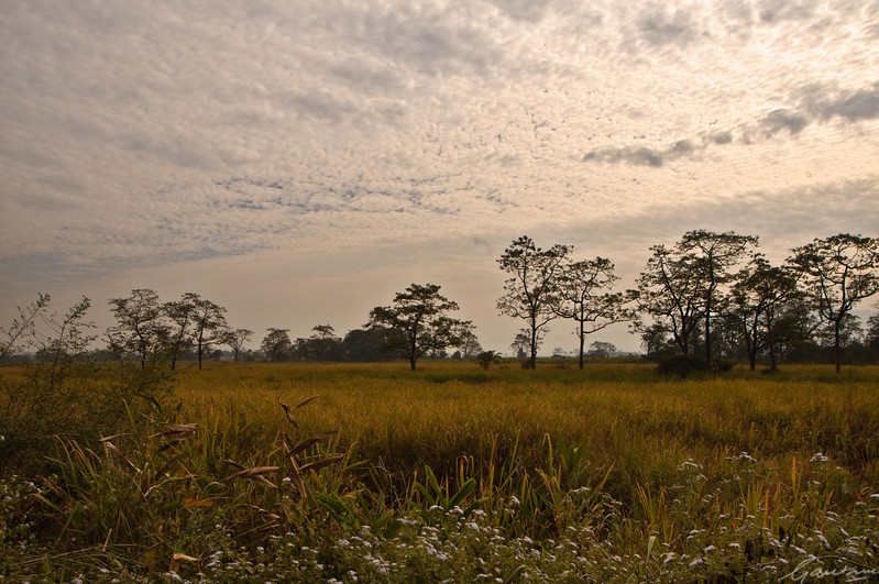 18: Kaziranga Forests 24 December 2011