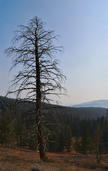 Ski Lake Dead Pine.jpg