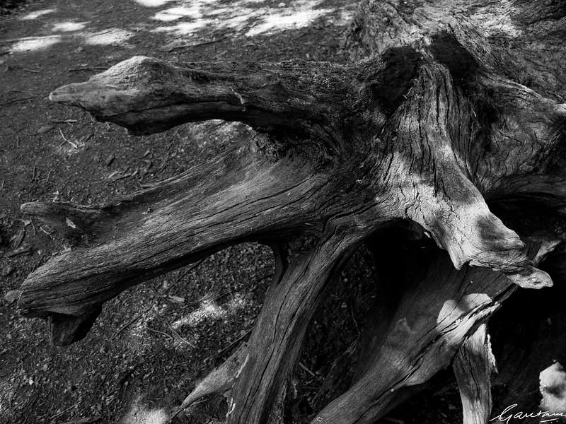 Fallen tree, South Mountain Reservation, Short Hills, New Jersey