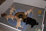 Fourth Week with the Puppies