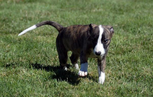 09-10-2006 - Buster x Jazz Pups