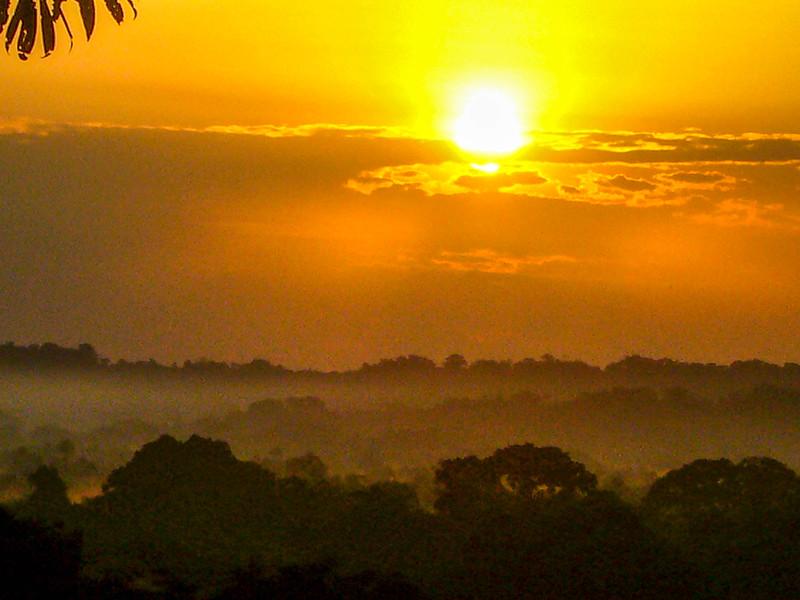 treetop sunrise.jpg