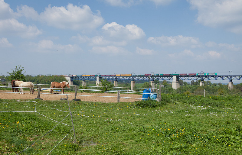 Eastern Belgium is horse country. These are enjoying a good view of the Viaduc de Moresnet as a doubleheaded intermodal starts out onto the bridge from Montzen running towards Aachen/D.