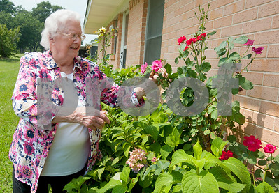 rose-bud-volunteer-spends-50-years-helping-with-roses